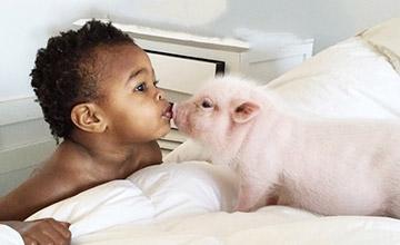 粉紅姐妹的一家 2歲的領養娃vs.3歲迷你豬