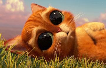最迷人的貓咪 看超過3秒你就會陷入