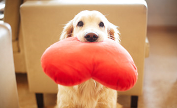 寵物狗最想對主人說的10句話(洋蔥好大顆)