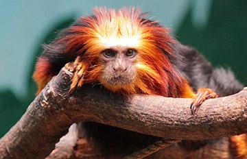 【PIKI測試】你的前生是一種什麼動物?此刻正在做什麼?