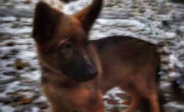 警犬遭恐怖份子炸死 法國收到一個超感人的禮物