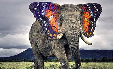 一覺醒來...世上竟多了這麼多新物種!!