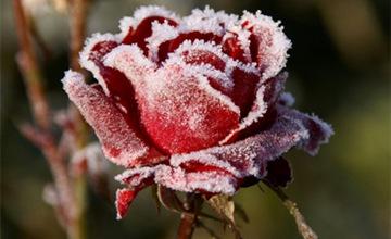 揮別孤獨幫!今冬你的桃花運就藏在這個「字」裡