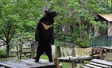 工讀生假扮?站立的台灣黑熊波比爆紅 專家卻說別再娛樂牠!
