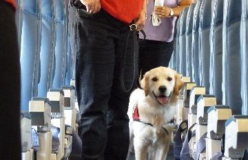 毛孩一起坐客艙還有專屬機上餐!全日空試辦「汪汪班機」