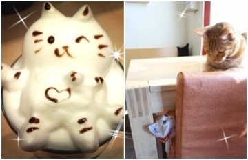 「喵星人在這 ! 」不能錯過的超萌貓咪咖啡廳★