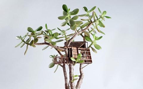 世界上還有比這更小的房子嗎? 美國藝術家建造微縮樹屋盆景 Somewhere Small