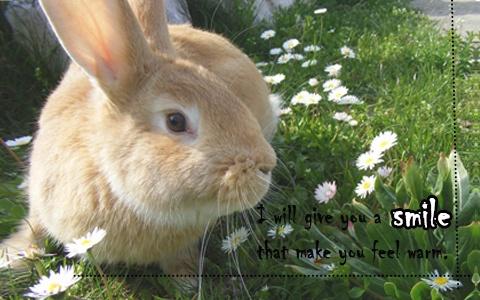 PIKI暖心圖話:一個人的時候想要兔子暖暖的抱抱◕ㅅ◕