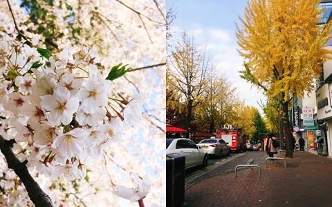 韓國「每天都超好拍」實在太幸福啦~各月份必看景點推薦!