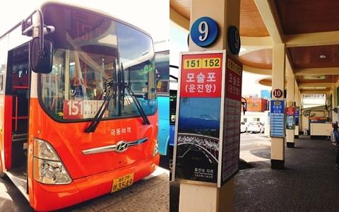 誰說濟州一定要包車才玩得痛快? 只要看準時間,其實坐巴士一樣可以輕鬆暢遊濟州。