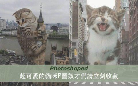 歡迎來到喵星球!超可愛的貓咪P圖奴才們請立刻收藏