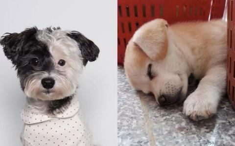 不只是最近在韓國爆紅的「糯米糕」!其他明星犬過去也都有心酸的故事
