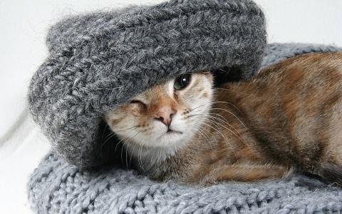 萌貓主人大作戰!只是幫你穿個衣服有必要表情這麼猙獰嗎?