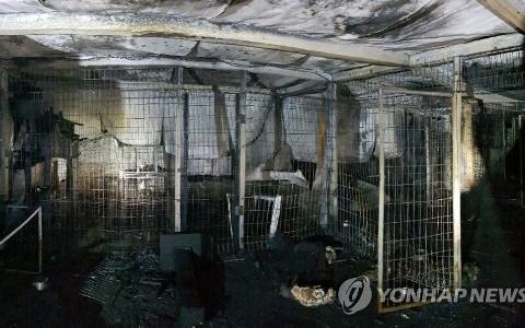 李孝利領養愛犬的動物收容所發生火災...260餘隻流浪動物被燒死