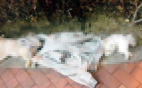 太殘忍了!韓國20代女性竟將自家三隻小狗從高樓丟下,警方破門後發現她還試圖自殺?!