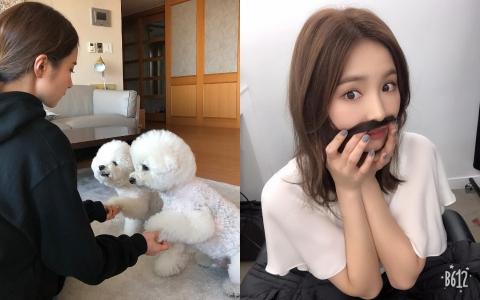 「如果把狗拿來熬湯肯定很美味」韓國網友這段話激怒申世景!