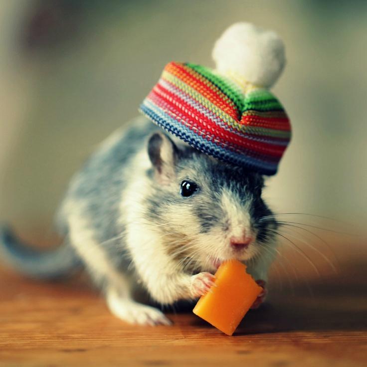 繼上次介紹的小雞頂上時尚秀~ 這回要給大家看看沙鼠時尚秀