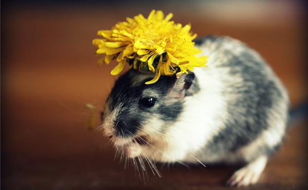 看我「鼠比花嬌」