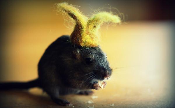 回家試試看幫鼠寶貝們妝點新樣貌吧~