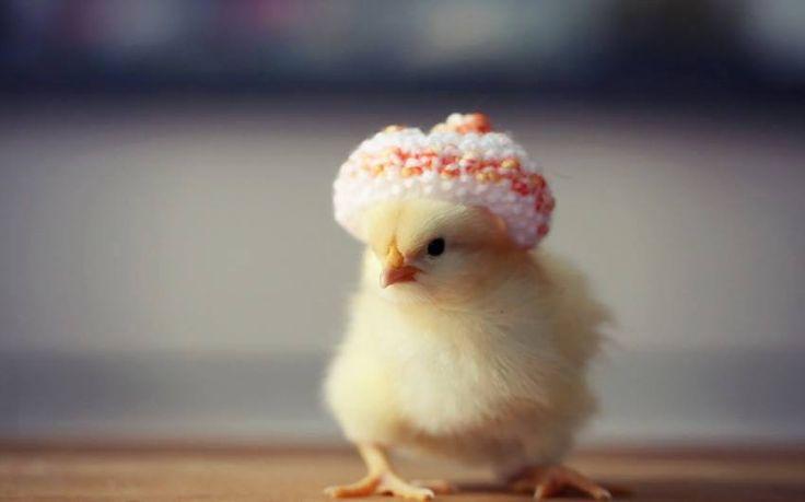 寒流來襲~~ 現在正是戴毛帽的季節~