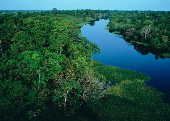 """2.被譽為""""地球之肺""""和""""生物天堂""""的亞馬遜熱帶雨林, 近一個世紀以來, 人類的過度開發和森林火災, 使得熱帶雨林正在快速消失。"""