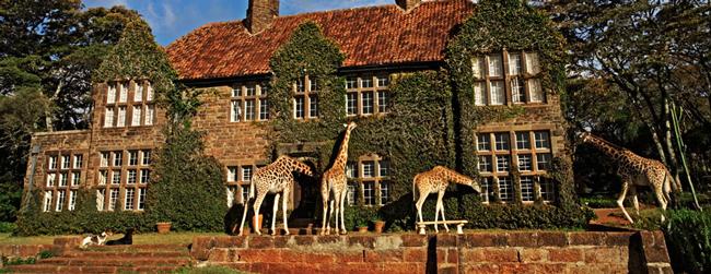 3.長頸鹿莊園坐落在肯亞國家公園 周圍有野生長頸鹿棲息的一家酒店