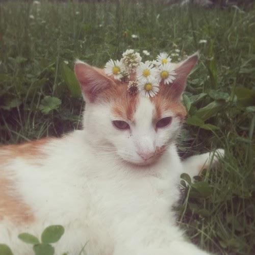 彷彿小公主