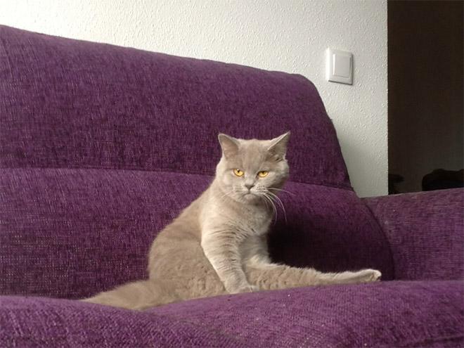 安静而優雅地坐著,我就是上帝~
