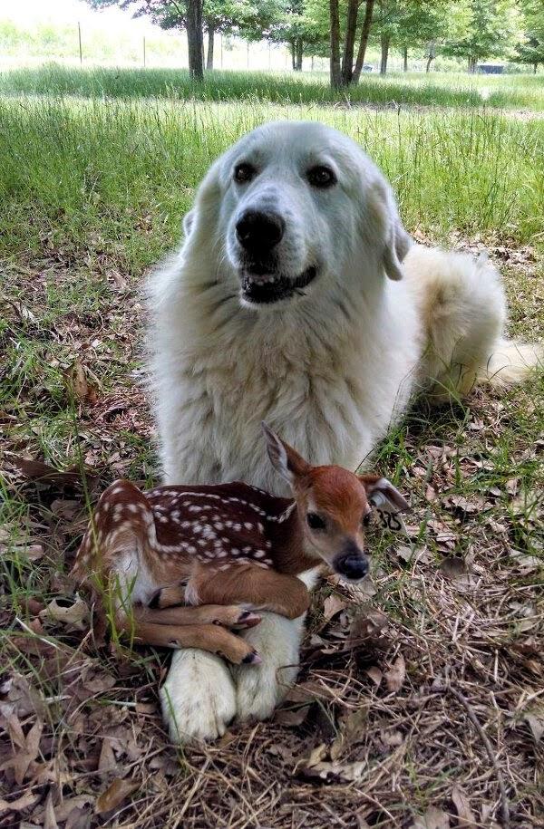 做為勝利組~我的寵物是小鹿