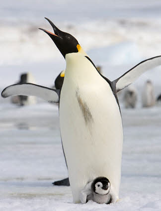 有鳥沒有的家庭觀念: 老公!過來看看你家熊孩子!管不了了,管不了了!!!