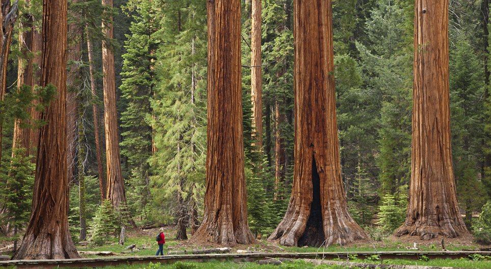 這是一個為了巨人樹而進行的一場試驗