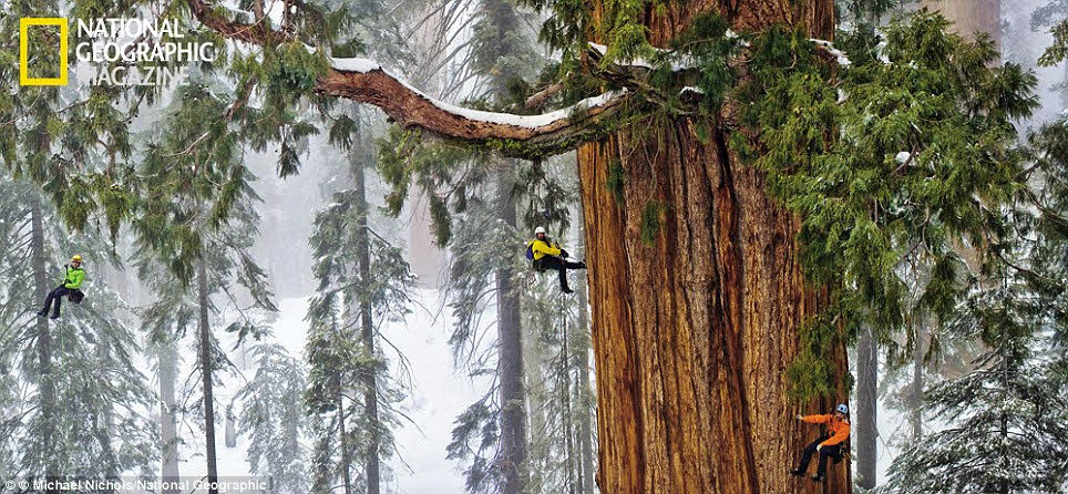 National Geographic國家地理雜誌攝影師接下這個任務 打算要幫這棵樹拍張全身照