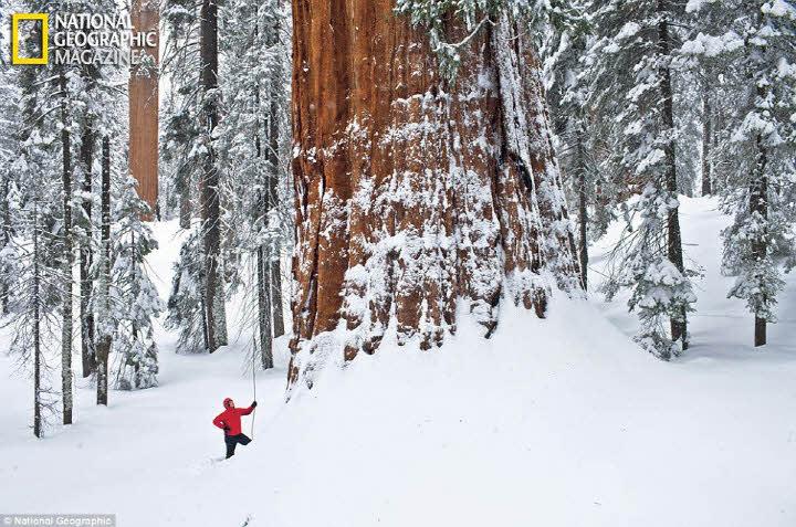 然而他的直徑寬達8公尺(27英呎) 高達75公尺(247英呎),相當於25樓層高