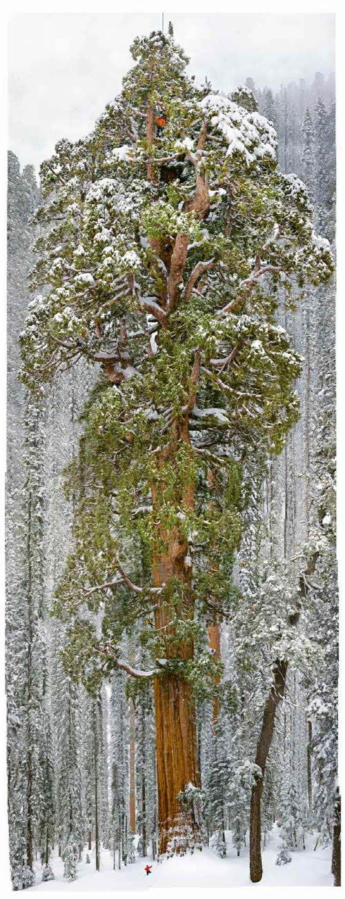 才能拼出一張完整樹木的原形