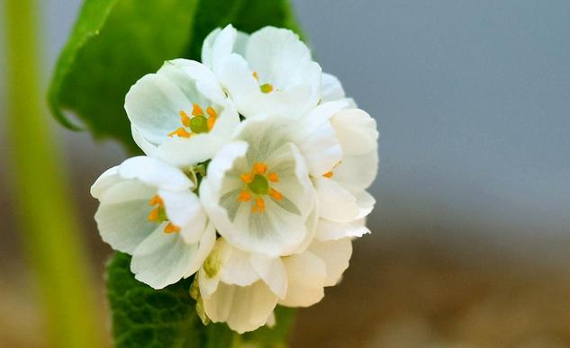 平常呢 就像其他花朵一樣 美得很平凡