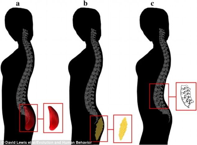 Nonono!!並不是大就是好  今年3月來自土耳其比爾肯特大學教授David Lewis發表研究指出 男人判定女人背影魅力 是根據女人腰和屁股之間的角度(也就是腰椎曲度)