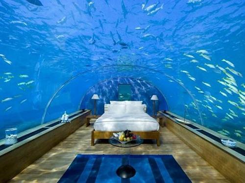 #18 然後就有千百隻魚看你睡覺....呵呵