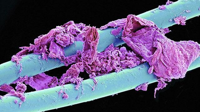 #牙線 (額....紫色的是牙垢嗎...)
