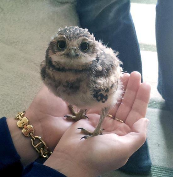 還是小朋友的牠們就像這樣小巧可愛 可以捧在雙手中!