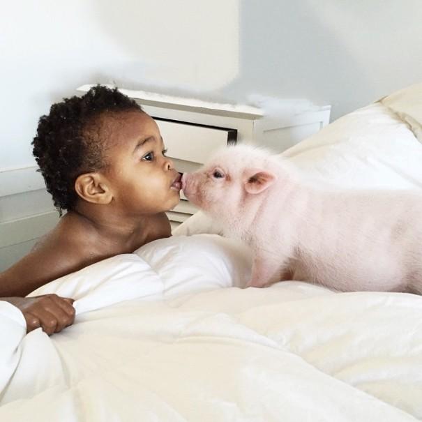 兩歲的小天使Libby和可愛的小豬Pearl(珍珠)