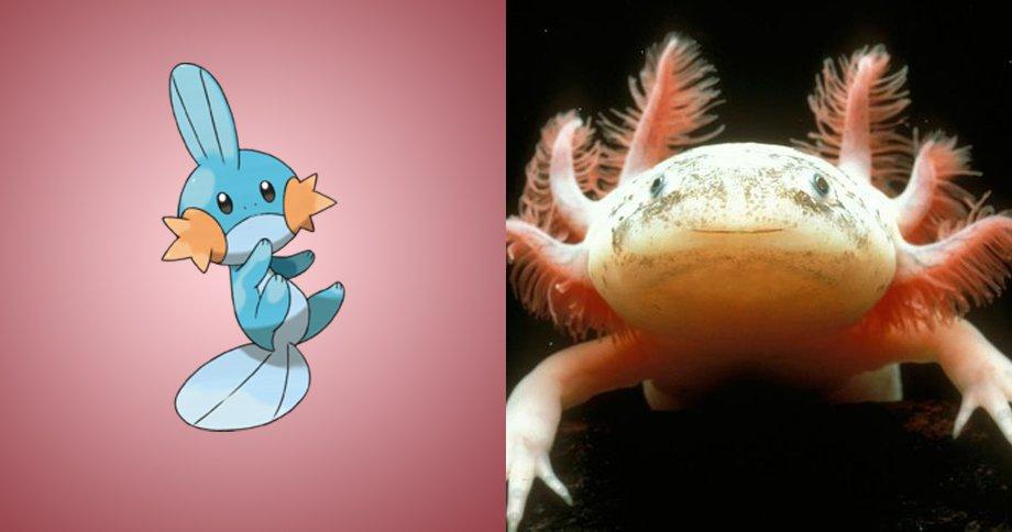 3. 水躍魚 原型:墨西哥特有物種墨西哥鈍口螈,也被稱為「六角恐龍」