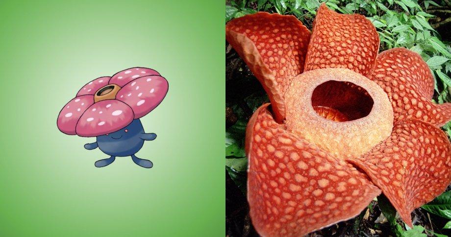 6. 霸王花 原型:大王花,是地球最大的花種