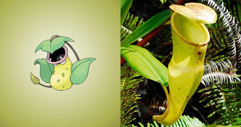 7. 大食花 原型:豬籠草,本身就是食蟲性植物~