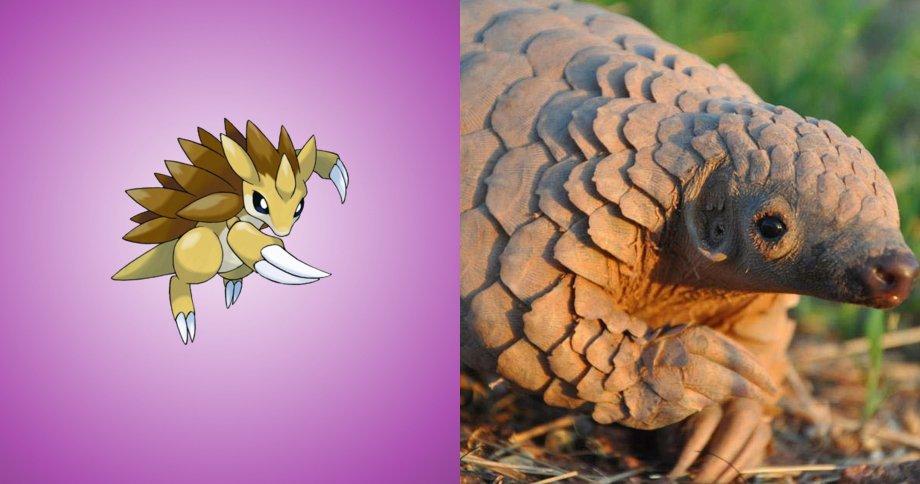 8.穿山王 原型:穿山甲,是一種全身披覆鱗片的食蟻動物