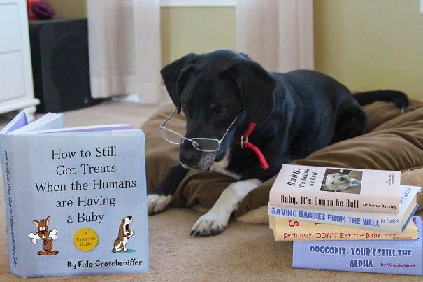 #小狗開始擔心寶寶出生後的失寵生活XD (書名:當家裡有小寶貝後,如何依舊得寵)