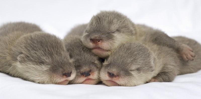 噓~~睡成一團的水瀨寶貝們,不要吵醒牠們喔~♥