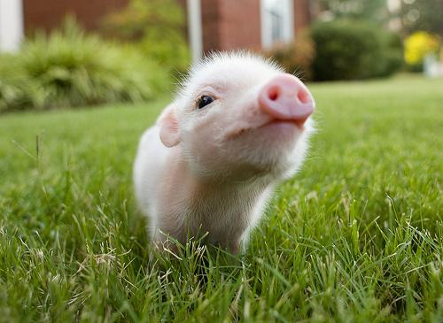 粉紅色的小鼻子,粉紅色的小耳朵~全身都這樣嫩嫩的~