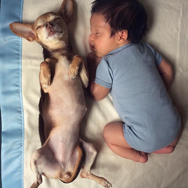家裡的小狗狗,也身兼保姆,要陪著小寶貝一起長大唷!
