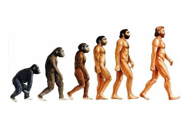神奇的是,科學家發現, 在人類進化論的階段裡,骨盆的尺寸似乎都沒有變化!? 難道不應該跟著進化大一點嗎?