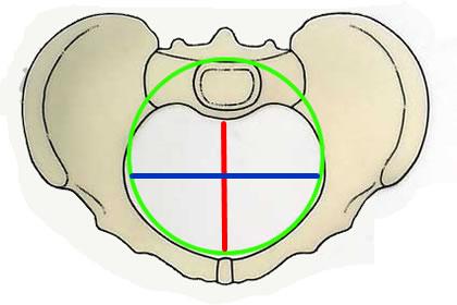 可是媽媽的骨盤卻是左右比較寬,前後比較窄!
